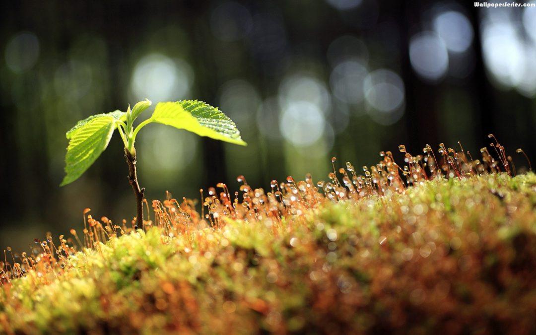 Meio Ambiente – Por um mundo mais sustentável